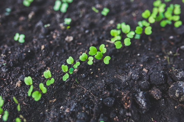 semenáčky rokety v půdě