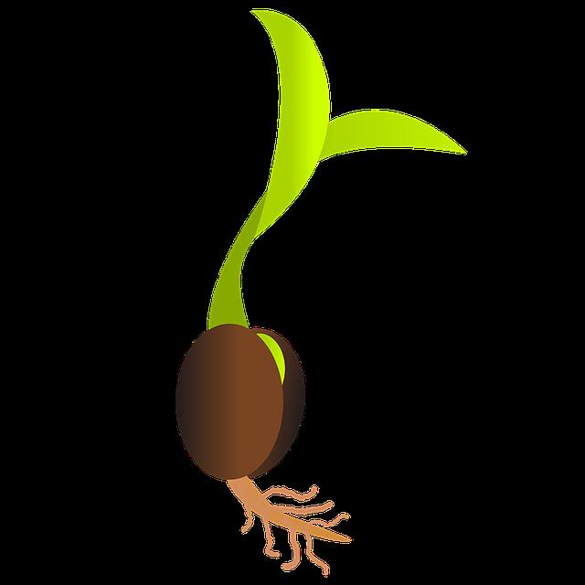 schéma klíčící rostliny – jednoděložné